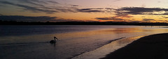 Just another sunset over the river (judith511) Tags: odc lightonthewater sunset reflections wave pelican bird silhouette clouds river ballina nsw australia richmondriver