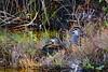 Sitting Ducks! (maginoz1) Tags: thenook abstract art gander ducks pond water curves sunbury victoria australia winter august 2017