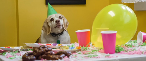 """Woody the Dog in """"The Afterparty"""""""