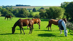 relaxing polo horses (museque) Tags:
