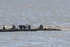Kormorane (juergen.treiber) Tags: kormoran flut sehestedt
