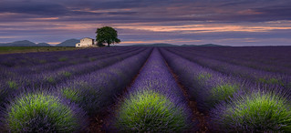 One Evening in Provence