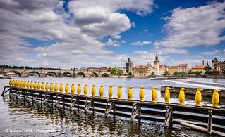 Yellow penguins, Prague #10