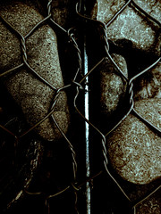 Twists and Turns (Steve Taylor (Photography)) Tags: twisted rock brown monocolor monocolour silver closeup metal steel stone pebble newzealand nz southisland canterbury christchurch cbd city texture contrast stark shiny shadow chainlink cage