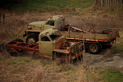 Retired Warhorses (Darren Schiller) Tags: abandoned australia automobile carcoar derelict disused decaying deserted dilapidated wrecks truck green rural rustic rusty transport