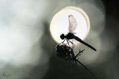 A la luz de la luna (Quimpadi) Tags: