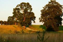 Landscape (Jurek.P) Tags: wróbel road countryside country mazury masuria masurianlandscapes landscape sunset jurekp sonya77