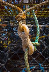 Lobster Pot (steveivy23) Tags: knot barnicle lobster pot rope