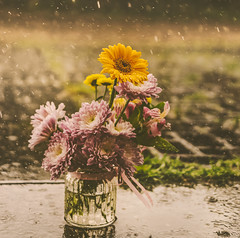 It's a rainy day (ChicqueeCat) Tags: raindrops rain flowers outdoor nikon d3300 40mm