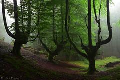 The sacred forest (Hector Prada) Tags: bosque niebla atmósfera verano lluvia paraiso naturaleza árbol mágico sagrado forest fog mist atmosphere summer rain nature tree magic misterious sacred mystic enchanted creepy paísvasco basquecountry