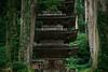羽黒山出羽神社五重塔