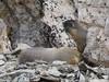 P1230684 (archaeologist_d) Tags: rockymountainnationalpark colorado estespark oldfallriverroad marmots