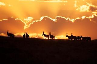 South Africa Hunting Safari - Eastern Cape 19