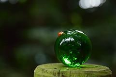 20170829_035_2 (まさちゃん) Tags: グリーン 緑 クリスタルボール てんとう虫 テントウムシ 天道虫 光