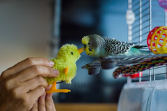 Gimme some sugar, baby (Aresio) Tags: parrot animal bird peluche kiss