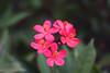 (noidcanuse2011) Tags: lumixg20f17 gf2 m43 flower plant