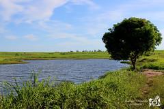 Portfólio Rodrigo Amendola (Rodrigo Amendola Fotografia) Tags: fotografiapaisagensnatureza viagem brasil paisagens viagens animais flora fauna cerrado pantanal sertão