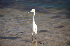 Key West_2016 (ana_ge) Tags: animals aniamis passaros birds keywest florida unitedstates estadosunidos babymoon northamerica americadonorte usa vacation2016