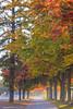 Fall Trees at the Oklahoma Track (Samantha Decker) Tags: canonef135mmf2lusm canoneos6d ny nyra newyork oklahomatrack samanthadecker saratogasprings autumn fall upstate