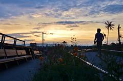 The High Line, 07.15.15 (gigi_nyc) Tags: highline highlinepark thehighline nyc newyorkcity summer sunset