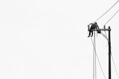 Una luz que busca encenderse / A light that seeks to turn on (ix 2017) Tags: cortázar elperseguidor trabajador worker electricidad electricity poste pole calle street intemperie outside byn bw cables wires altura highness ahuatepec cuernavaca morelosméxico mexico israfel67