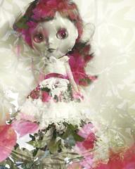 Rosewater Blythe