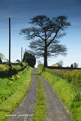 The Trackway (Holfo) Tags: flowers landscape trees yellow twin tracks trackway shropshire tree silhouette leadinglines nikon d5300 road sky grass
