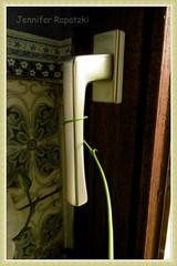 P1010456_Fotor (Bernsteindrache7) Tags: summer flora fauna house home nature indoor panasonic lumix