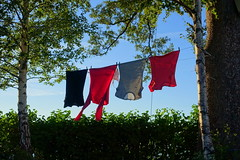 On the line (brittajohansson) Tags: laundry washing clothes washingline drying summer outdoors trees wind bluesky clothesline