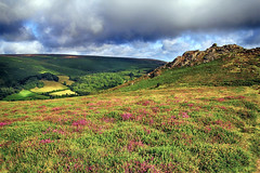 (OutdoorMonkey) Tags: dartmoor chinkwell tor outcrop rock valley hill hillside heather gorse cloud morning rural outside outdoor countryside nature natural scenic scenery view devon hameldown eastwebburn vegetation plant honeybag bonehilldown