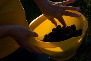 Kupine / Blackberries