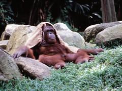 1994_Singapore_2016-07-18_Photo_238 (Matthias & Paula) Tags: singapore sentosa kuala lumpur malaysia cameron highlands zoo japanese gardens