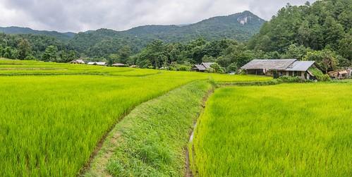 doi inthanon - thailande 68