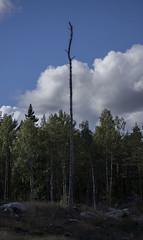 Skogskövling är ett miljöproblem som kan leda till just erosion... (My Photolifestyle) Tags: erosion skogskövling nature naturephoto fs170917 fotosondag