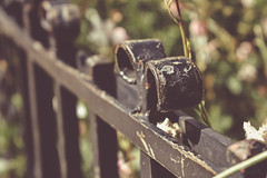 Shaped fence (*mirt) Tags: fence fencefriday bruges vintage moody flowers green brown bokeh dof depthoffield