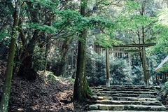 Sanctuary Of Truth Green Color Shinto Shrine In The Forest Forest Path Trees TORII Torii Gate Green Color Steps Beauty In Nature Power In Nature No People Growth Travel Photography Travel Destinations August August 2017 (T.M Photos) Tags: sanctuaryoftruth greencolor shintoshrine intheforest forestpath trees torii toriigate steps beautyinnature powerinnature nopeople growth travelphotography traveldestinations august august2017櫻井大神宮糸島