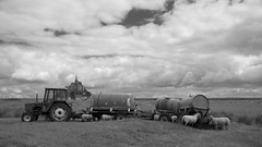 Dans les prés salés *---- ° (Titole) Tags: baiedumontsaintmichel préssalés tractor sheep sheeps citernes citerne tank tracteur rural agricole montsaintmichel titole watertank nicolefaton bw nb blackandwhite noiretblanc clouds cloudy field friendlychallenges perpetual