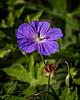 Sunny Star (MrBlueSky*) Tags: flower petal garden nature horticulture outdoor colour kewgardens royalbotanicgardens london aficionados pentax pentaxlife pentaxk1 pentaxawards pentaxflickraward