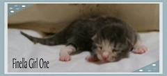 finellanbaug6 (nwhiker) Tags: cats auri twisp