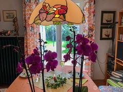 Lila Orchideen als Tischblumen (Laterna Magica Bavariae) Tags: münchen bayern deutschland de tisch blumen tischblumen orchideen sonntag