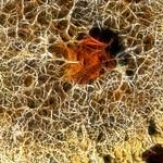 Organic Abstract thumbnail