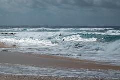J68A6808-2 (patriciacorsiatto) Tags: hawaii2017 at beach