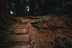 steps2 (amackcrane) Tags: superia 400 nikkormat ft2 135 28mm