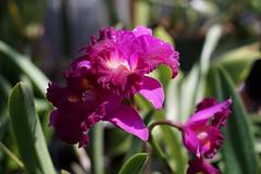 DSC07721 (MrApplegate713) Tags: sonya7 smcpentaxm50mmf17 park flowers