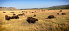 Oh give me a home where the buffalo roam (Kirsten Osa) Tags: moran wyoming unitedstates us bison buffalo herd animals mammal