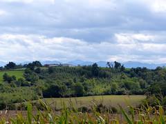 Bergouey-Viellenave, Pyrénées-Atlantiques (Marie-Hélène Cingal) Tags: aquitaine nouvelleaquitaine pyrénéesatlantiques 64 france sudouest bergoueyviellenave nwn