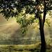 Autumn sunlight - explore (Rita Eberle-Wessner) Tags: baum tree landschaft landscape gras grass wiese meadow nebel fog blätter laub leaves sonne sonnenstrahlen sunrays sunbeams blendenstern sonnenstern herbst autumn fall odenwald