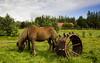 Animals. (ost_jean) Tags: horse paard cheval animal dieren nikon d5200 tamron sp af 1750mm f28 xr di ii vc ld ostjean