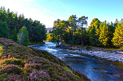 Mar Lodge Estate 19 September 2017 175.jpg (JamesPDeans.co.uk) Tags: riverdee landscape plants gb greatbritain season industry autumn prints for sale colour purple heather nature unitedkingdom transporttransportinfrastructure digital downloads licence scotland britain deeside water wwwjamespdeanscouk river aberdeenshire man who has everything landscapeforwalls europe uk james p deans photography digitaldownloadsforlicence jamespdeansphotography printsforsale forthemanwhohaseverything