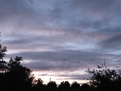 Colours of dusk (seikinsou) Tags: ireland westmeath autumn dusk sky cloud tree